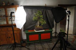 fotografovani-bonsaji-1