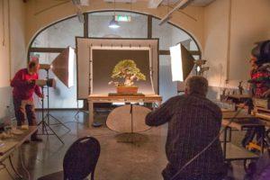 fotografovani-bonsaji-3