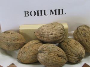 Bohumil